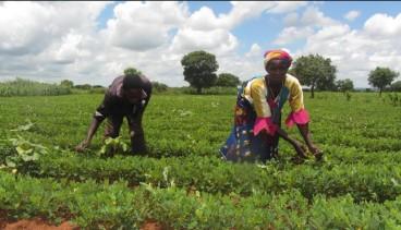 GN farming Malawi