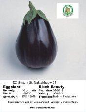 Egg plant Black Beauty front