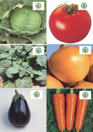 Collage vegetables DS